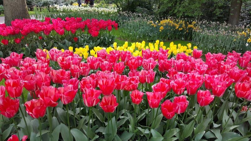 Ευτυχές λουλούδι στοκ φωτογραφία