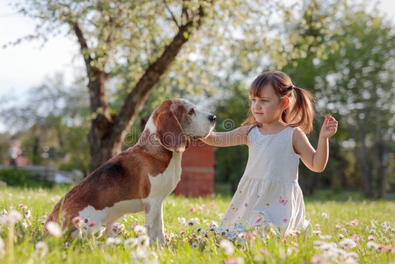 Ευτυχές παιχνίδι μικρών κοριτσιών με το σκυλί στον κήπο στοκ φωτογραφίες με δικαίωμα ελεύθερης χρήσης