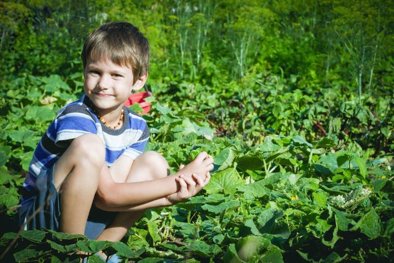 Ευτυχές παιδί που επιλέγει τα φρέσκα λαχανικά στον κήπο στη θερινή ημέρα Οικογένεια, υγιής, κηπουρική, έννοια τρόπου ζωής στοκ εικόνες
