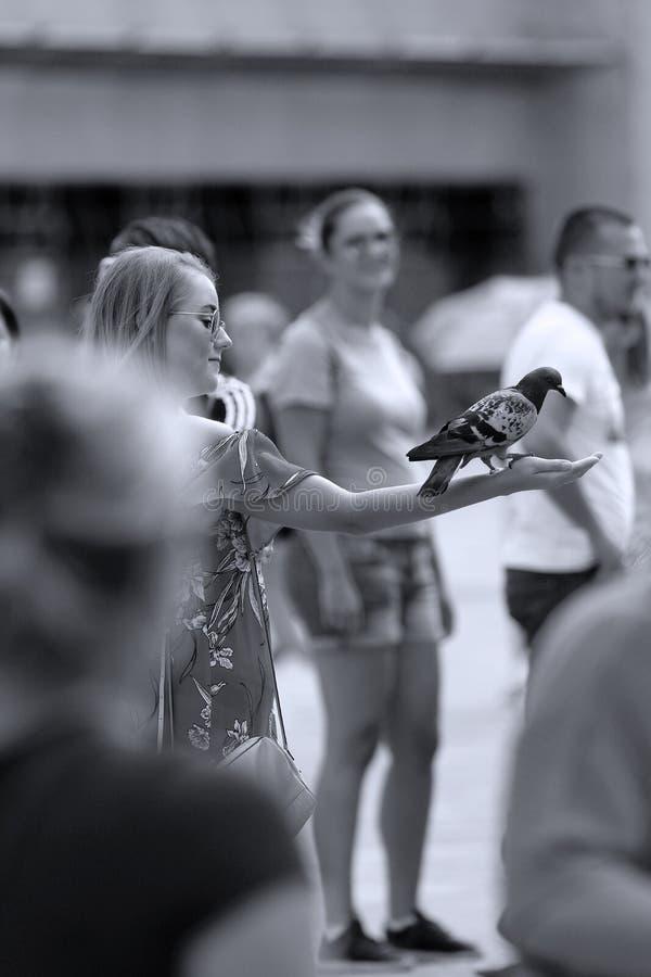 Ευτυχές περιστέρι εκμετάλλευσης τουριστών γυναικών στο βραχίονά της στη Βενετία, Ιταλία στοκ φωτογραφία
