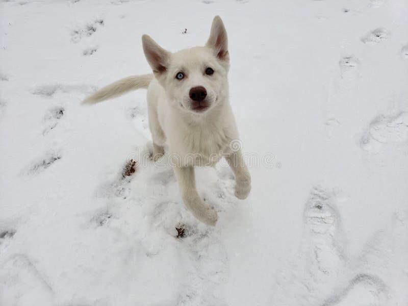 Ευτυχές σκυλί χιονιού στοκ εικόνες με δικαίωμα ελεύθερης χρήσης