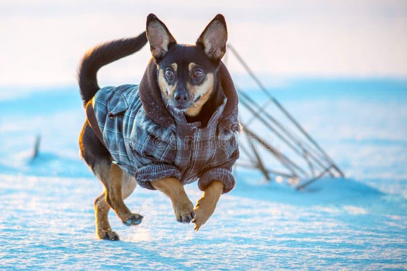 Ευτυχές σκυλί με τα ενδύματα στοκ φωτογραφία με δικαίωμα ελεύθερης χρήσης
