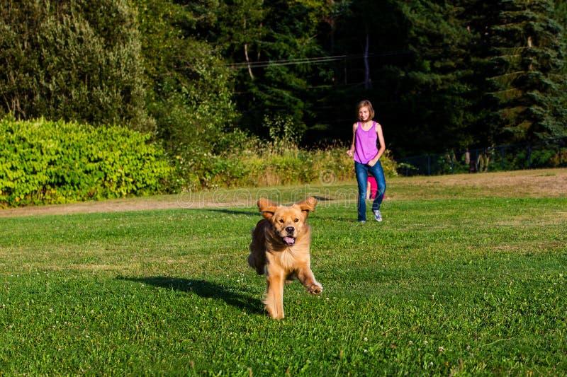 Ευτυχές τρέξιμο σκυλιών στοκ φωτογραφίες