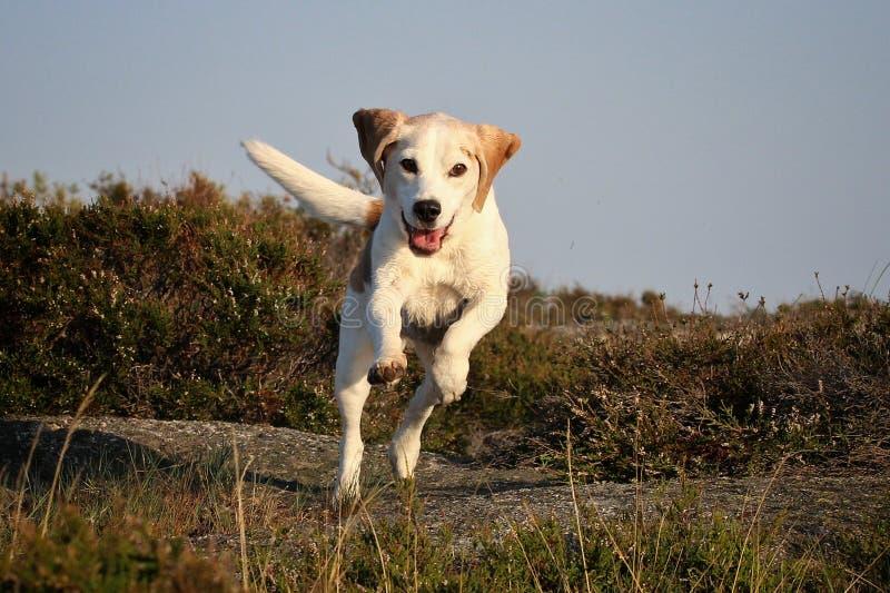 ευτυχές τρέξιμο στοκ φωτογραφία με δικαίωμα ελεύθερης χρήσης