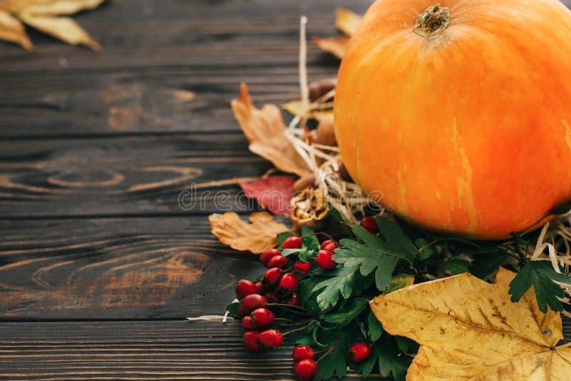 Ευτυχής έννοια ημέρας των ευχαριστιών Όμορφη σύνθεση της κολοκύθας, Au στοκ εικόνες