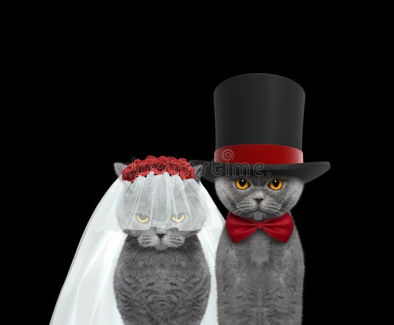 Ευτυχής γάμος γατών Απομονωμένος στο Μαύρο στοκ εικόνες με δικαίωμα ελεύθερης χρήσης