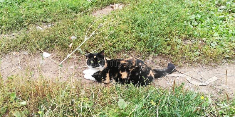 Ευτυχής γάτα στο θερινό περίπατο στοκ φωτογραφία με δικαίωμα ελεύθερης χρήσης