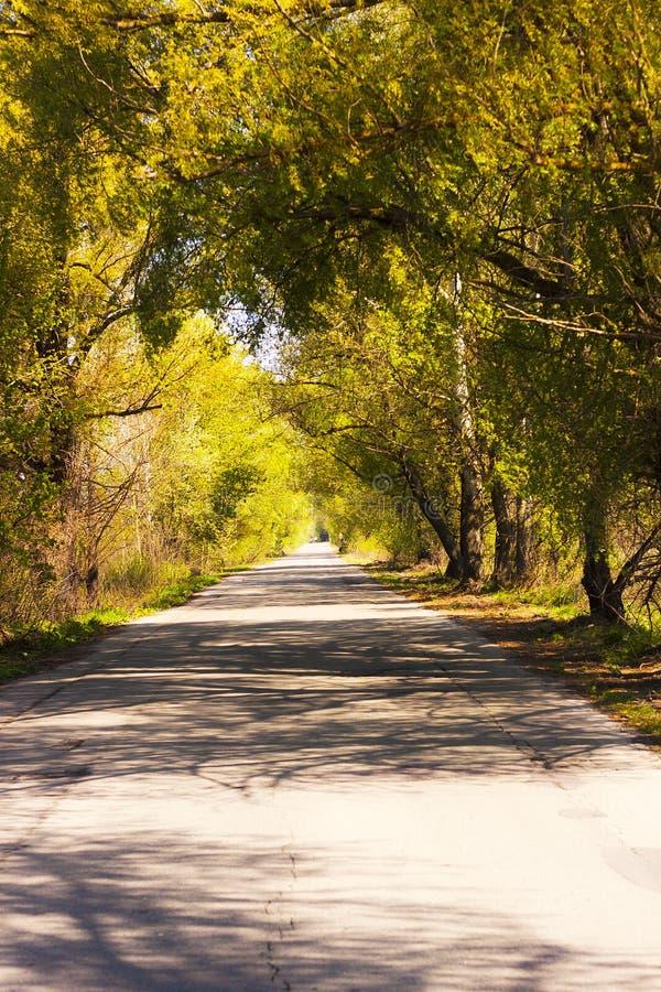 Ευτυχής δρόμος ηλιόλουστος καιρός Δρόμος στο καλοκαίρι στοκ φωτογραφίες με δικαίωμα ελεύθερης χρήσης