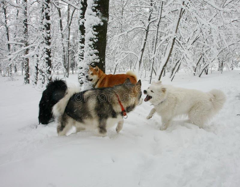 Ευτυχής επιχείρηση σκυλιών στοκ εικόνες