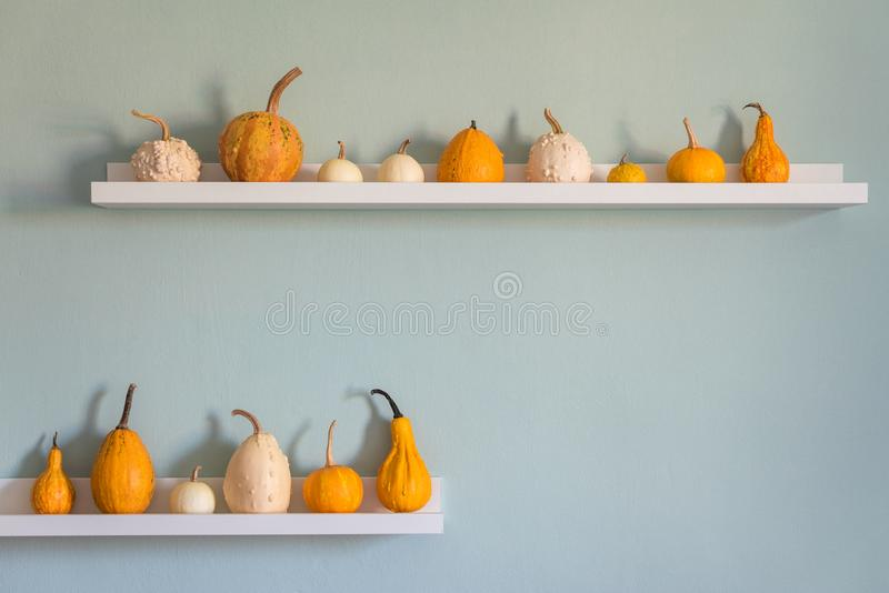 ευτυχής ημέρα των ευχαρι&s Επιλογή των διάφορων κολοκυθών στο άσπρο ράφι ενάντια στο χρωματισμένο τυρκουάζ τοίχο κρητιδογραφιών Κ στοκ εικόνα