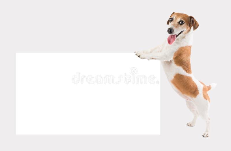 Ευτυχής μικρή εκμετάλλευση σκυλιών που ωθεί το άσπρο κενό έγγραφο στοκ φωτογραφίες με δικαίωμα ελεύθερης χρήσης