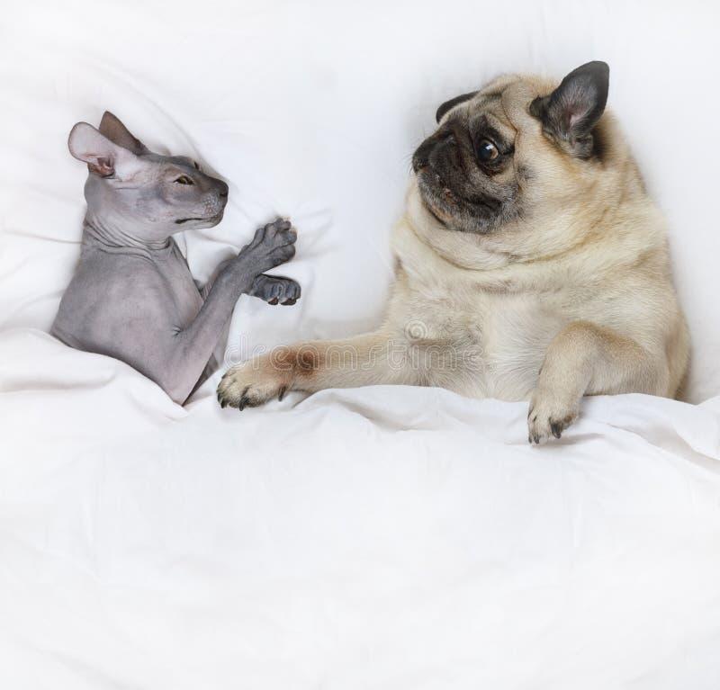 Ευτυχής οικογένεια κατοικίδιων ζώων στοκ φωτογραφία με δικαίωμα ελεύθερης χρήσης
