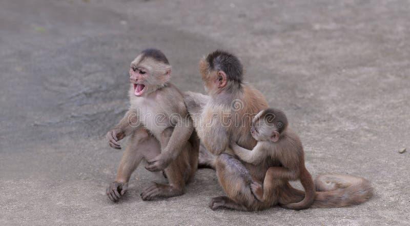 Ευτυχής οικογένεια (στη σύλληψη του πιθήκου) στοκ εικόνες