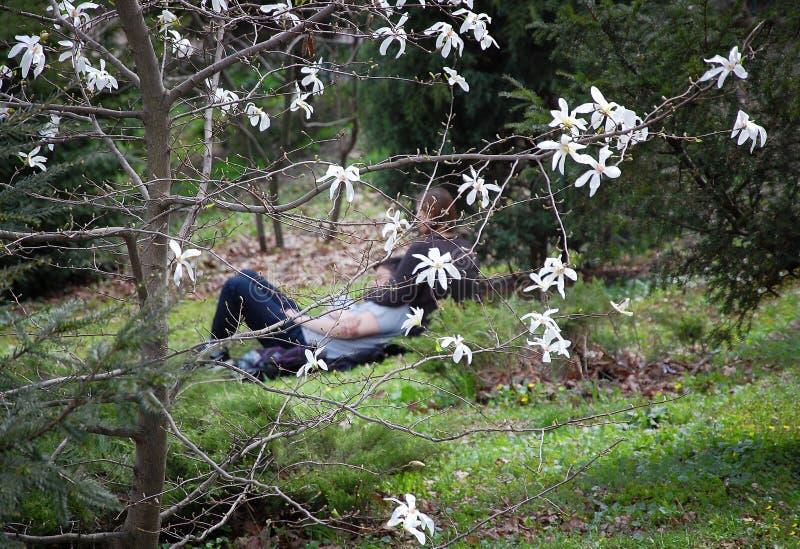 Ευτυχής χρόνος εξόδων ζευγών αγάπης στον κήπο μεταξύ των δέντρων του magnolia ανθών στοκ εικόνες