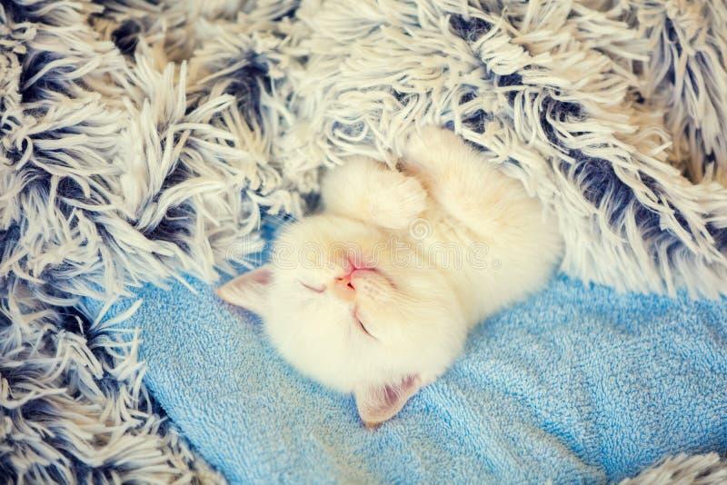 Ευτυχής ύπνος χαριτωμένος λίγο γατάκι που καλύπτεται με ένα χνουδωτό κάλυμμα στοκ φωτογραφία