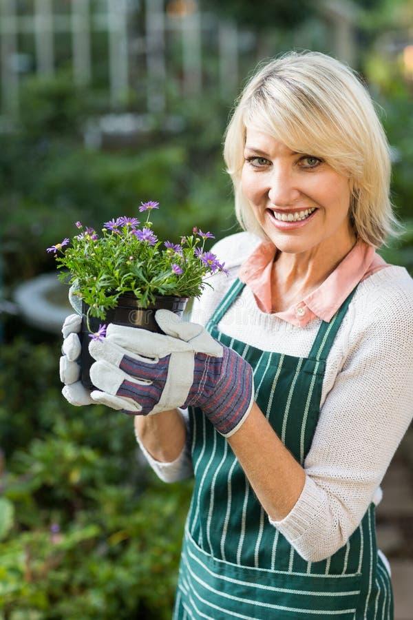 Ευτυχής ώριμος θηλυκός κηπουρός που κρατά τα σε δοχείο λουλούδια στοκ εικόνες