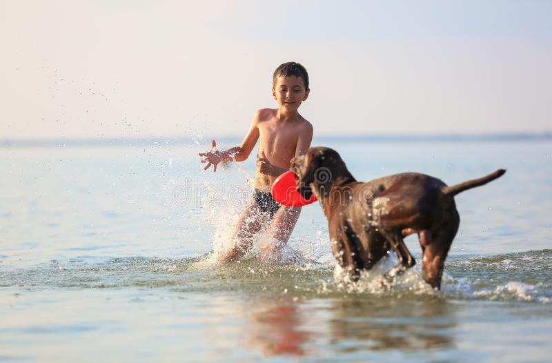Ευτυχή μικρά τρεξίματα αγοριών, παιχνίδια με το καφετί σκυλί κυνηγιού στο νερό E Ηλιόλουστη θερινή ημέρα της Νίκαιας Θέση της λίμ στοκ εικόνες με δικαίωμα ελεύθερης χρήσης