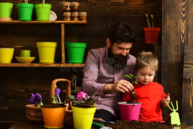Ευτυχείς κηπουροί με τα λουλούδια Οικογενειακή ημέρα θερμοκήπιο Πότισμα προσοχής λουλουδιών Εδαφολογικά λιπάσματα Πατέρας και γιο στοκ εικόνα