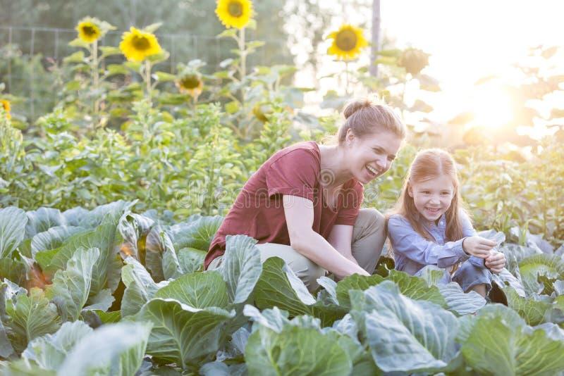 Ευτυχείς μητέρα και κόρη που συγκομίζουν τα οργανικά λάχανα στο αγρόκτημα στοκ εικόνες