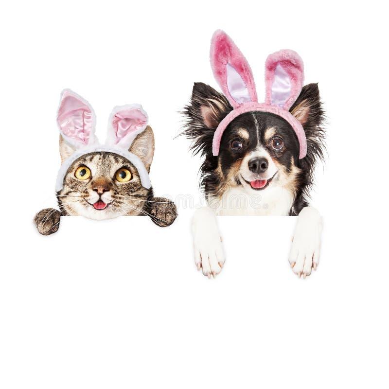 Ευτυχείς σκυλί και γάτα Πάσχας πέρα από το άσπρο έμβλημα στοκ εικόνα με δικαίωμα ελεύθερης χρήσης