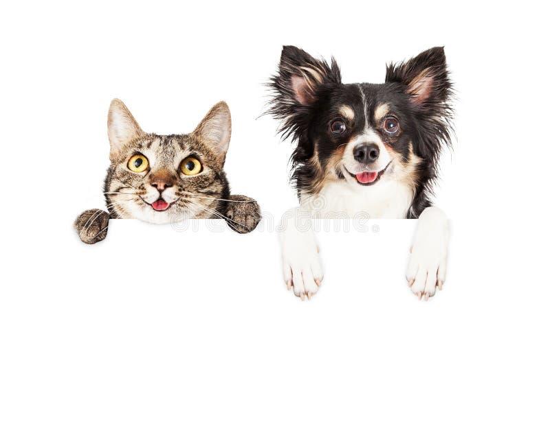 Ευτυχείς σκυλί και γάτα πέρα από το άσπρο έμβλημα στοκ φωτογραφία με δικαίωμα ελεύθερης χρήσης