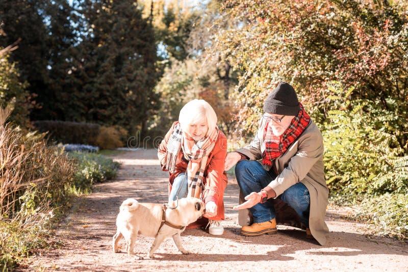 Ευχαριστημένο συμπαθητικό ηλικιωμένο ζεύγος που ταΐζει το σκυλί στοκ φωτογραφίες