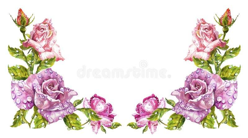 Ευχετήριες κάρτες ζωγραφικής Watercolor Αυξήθηκε υπόβαθρο, σύνθεση watercolor Σκηνικό λουλουδιών Απομονωμένη απεικόνιση επάνω ελεύθερη απεικόνιση δικαιώματος