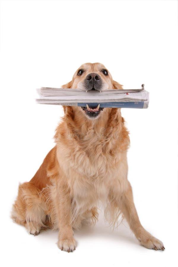 εφημερίδα σκυλιών στοκ εικόνα με δικαίωμα ελεύθερης χρήσης