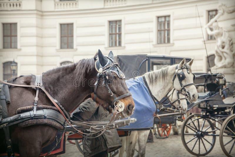 λεωφορείο Βιέννη στοκ εικόνες