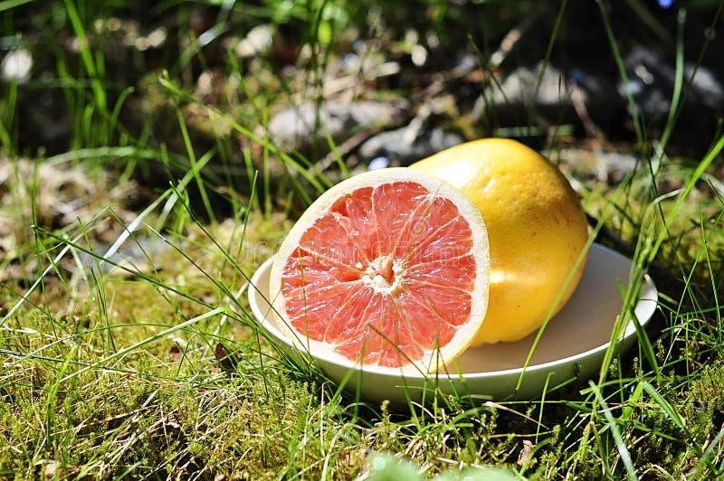 Εύγευστα και υγιή φρέσκα φρούτα σταφυλιών υπαίθρια σε μια χλόη σε έναν κήπο, ένα νόστιμο σύνολο εσπεριδοειδούς της βιταμίνης C στ στοκ εικόνες