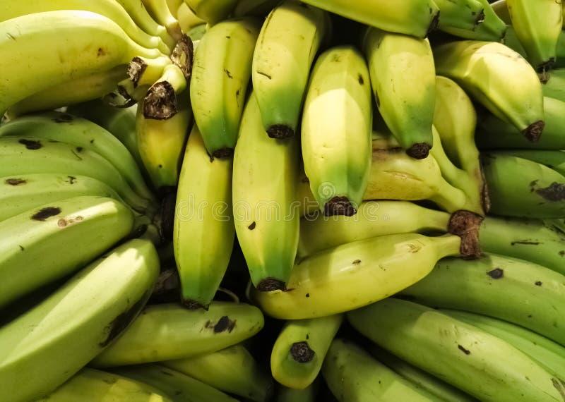 Εύγευστες μπανάνες στη συστάδα Ωρίμανση αυτών των τροπικών φρούτων: πράσινες και κίτρινες μπανάνες στοκ φωτογραφίες με δικαίωμα ελεύθερης χρήσης