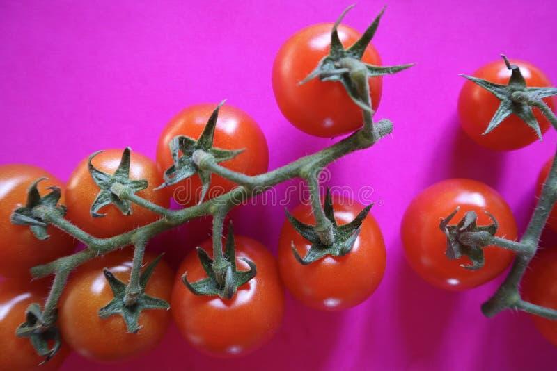 Εύγευστες Juicy κόκκινες ντομάτες κερασιών στην άμπελο στο φωτεινό ρόδινο υπόβαθρο στοκ εικόνα με δικαίωμα ελεύθερης χρήσης