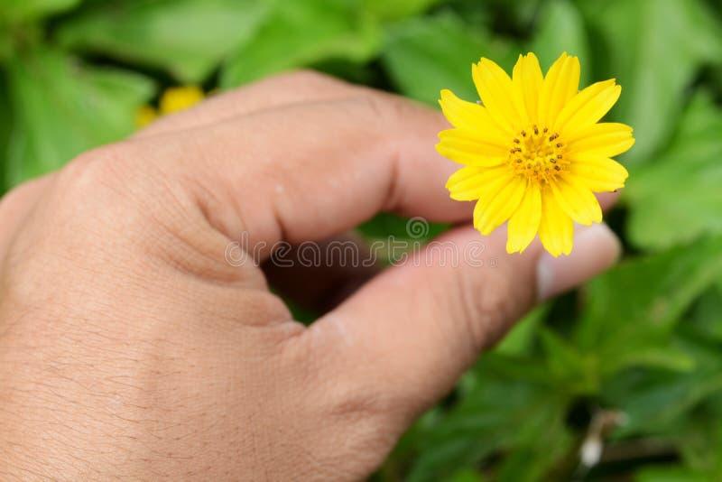 Εύθραυστο λεπτό κίτρινο λουλούδι στοκ φωτογραφία με δικαίωμα ελεύθερης χρήσης