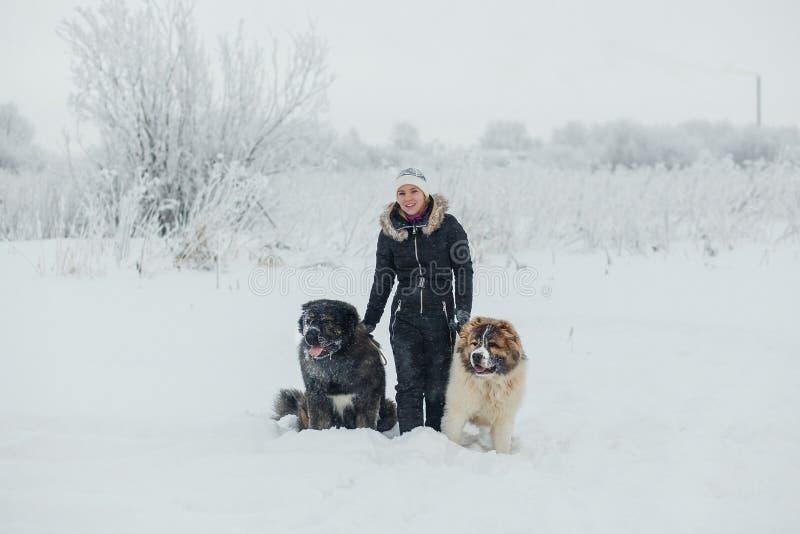 Εύθυμη νέα γυναίκα με το καυκάσιο σκυλί ποιμένων δύο στο χιονισμένο τομέα στην παγωμένη χειμερινή ημέρα στοκ φωτογραφία με δικαίωμα ελεύθερης χρήσης