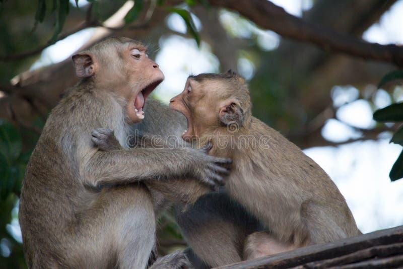 Εύθυμοι πίθηκοι στοκ εικόνα