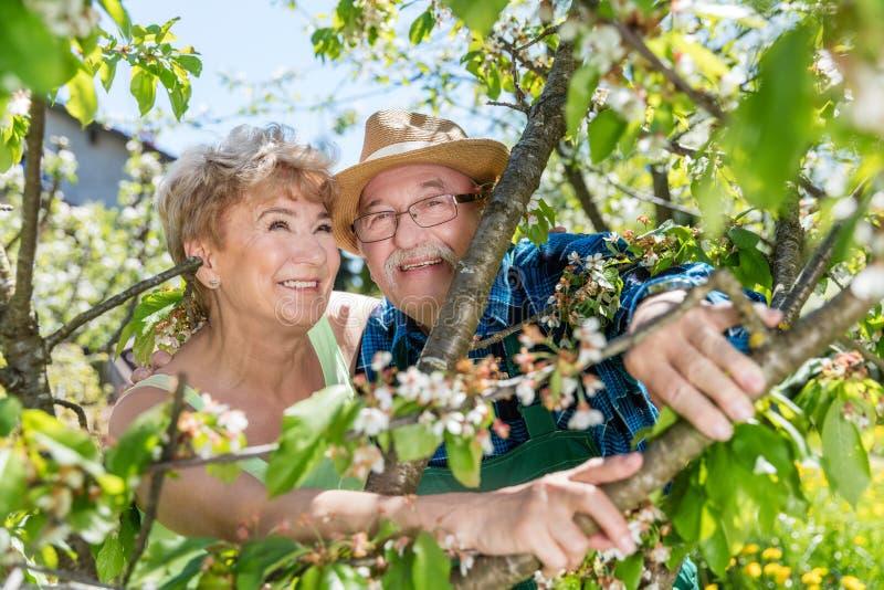 Εύθυμο ανώτερο πορτρέτο ζευγών μεταξύ των κλάδων δέντρων στοκ φωτογραφίες