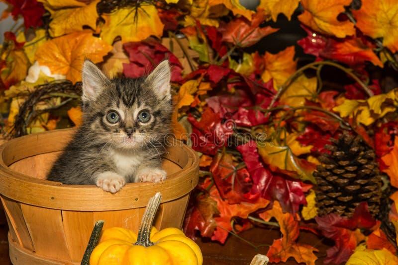 Εύθυμο γατάκι πτώσης στοκ εικόνα με δικαίωμα ελεύθερης χρήσης