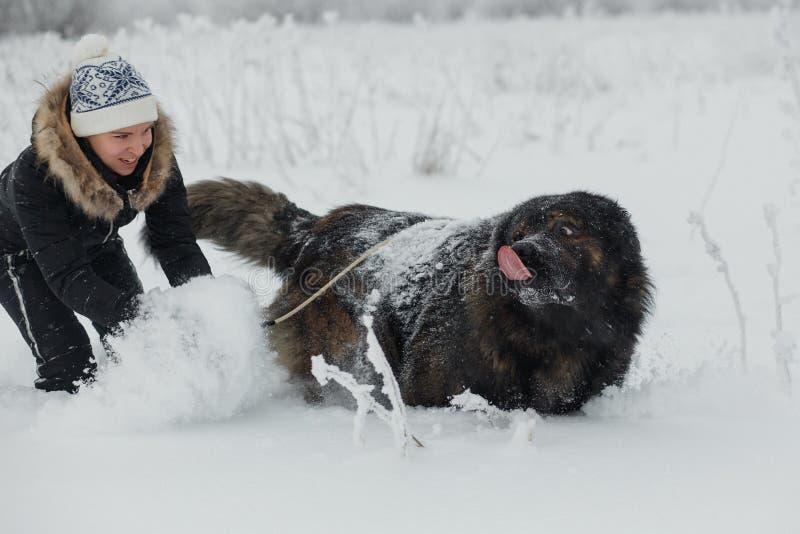 Εύθυμο νέο παιχνίδι γυναικών με το καυκάσιο σκυλί ποιμένων στο χιονισμένο τομέα στην παγωμένη χειμερινή ημέρα στοκ φωτογραφία με δικαίωμα ελεύθερης χρήσης