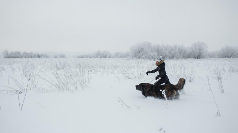 Εύθυμο νέο παιχνίδι γυναικών με το καυκάσιο σκυλί ποιμένων στο χιονισμένο τομέα στην παγωμένη χειμερινή ημέρα στοκ φωτογραφία