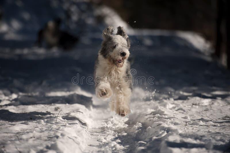 Εύθυμο σκυλί που τρέχει στο χιόνι στοκ εικόνα με δικαίωμα ελεύθερης χρήσης