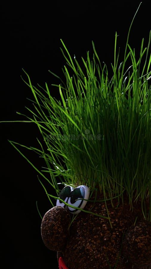 Εύφορος αστείος vermiculite αριθμός με την ανάπτυξη χλόης στο επικεφαλής, σκοτεινό υπόβαθρό του στοκ εικόνα