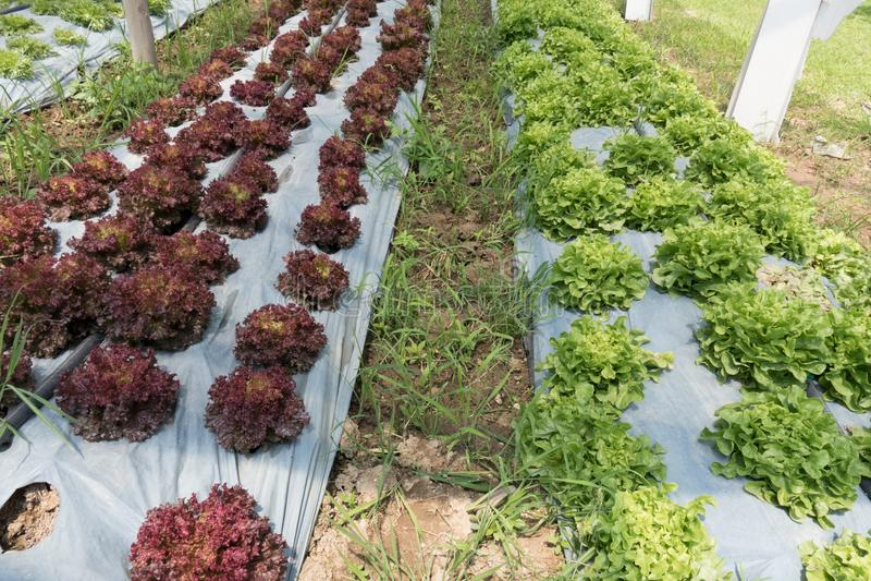 εύφορος γεωργικός τομέας για τη φύτευση της οργανικής συγκομιδής στο αγροτικό τοπικό LAN στοκ εικόνα με δικαίωμα ελεύθερης χρήσης
