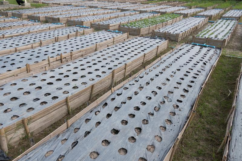 εύφορος γεωργικός τομέας για τη φύτευση της οργανικής συγκομιδής στο αγροτικό τοπικό LAN στοκ φωτογραφία με δικαίωμα ελεύθερης χρήσης