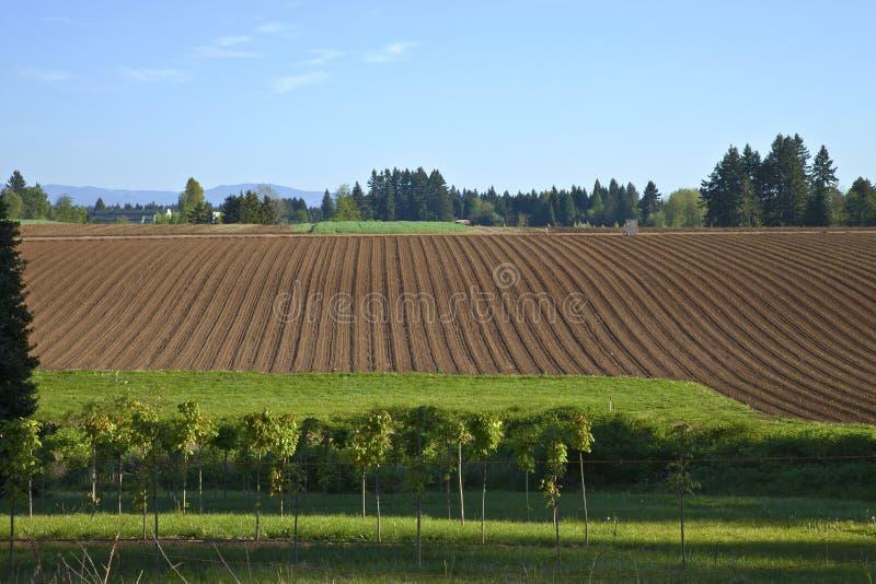 Εύφορος τομέας αγροτικό Όρεγκον. στοκ εικόνα