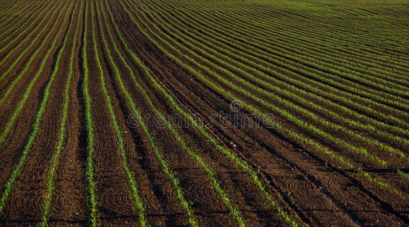 Εύφορος τομέας, συγκομιδές, καλλιεργήσιμο έδαφος στοκ φωτογραφίες με δικαίωμα ελεύθερης χρήσης