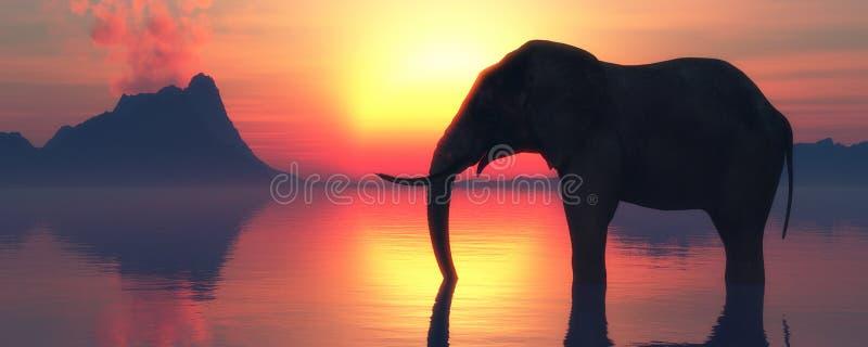 Ελέφαντας και ηλιοβασίλεμα στοκ φωτογραφία