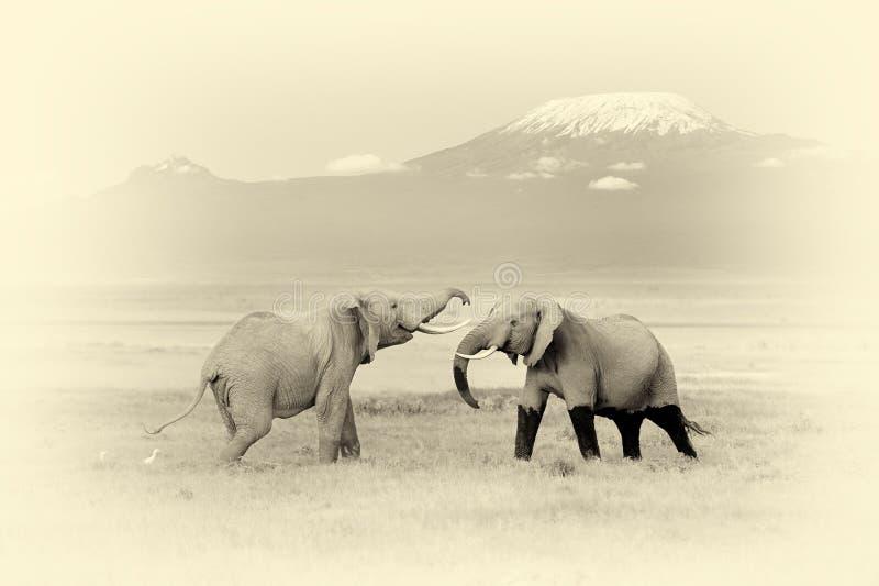 Ελέφαντας με το όρος Κιλιμάντζαρο Εκλεκτής ποιότητας επίδραση στοκ εικόνα