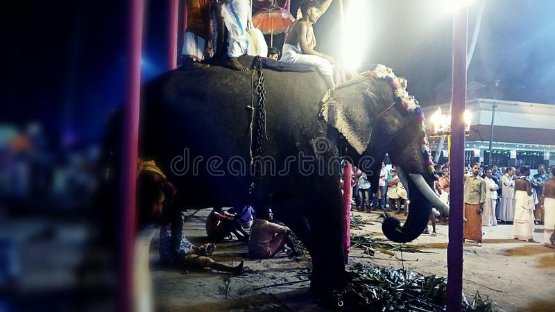 Ελέφαντας σε ένα festivel στοκ φωτογραφίες