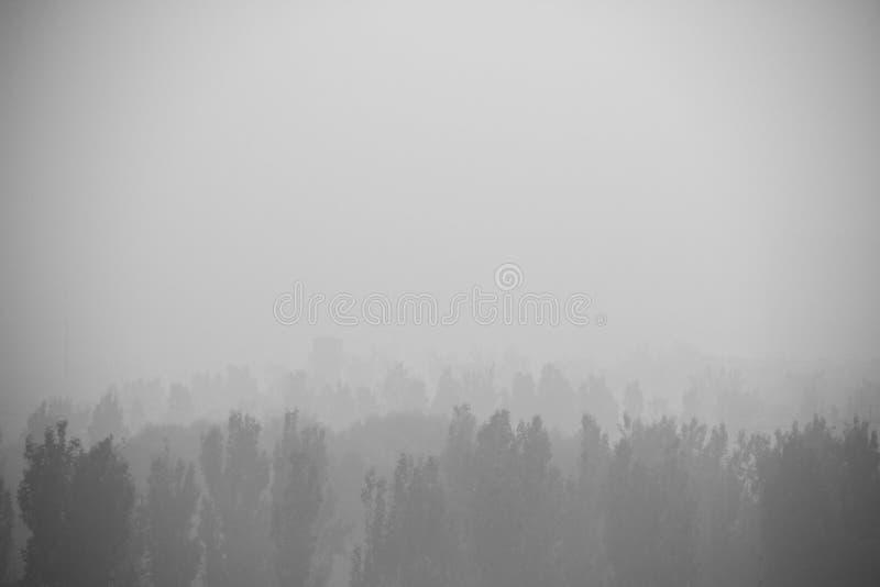 Ελαφριά ομίχλη στα ξύλα στοκ εικόνα με δικαίωμα ελεύθερης χρήσης