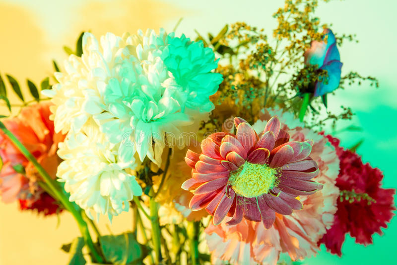 Ελαφρώς βλαστημένα λουλούδια που χρωματίζονται από τα speedlights και τα πηκτώματα στοκ φωτογραφία με δικαίωμα ελεύθερης χρήσης